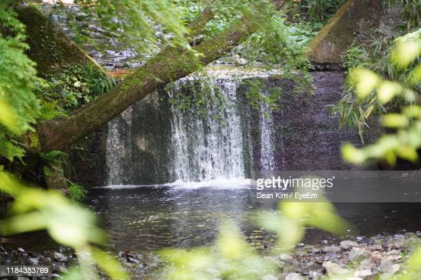 scenic view of waterfall in forest - focus on background ストックフォトと画像