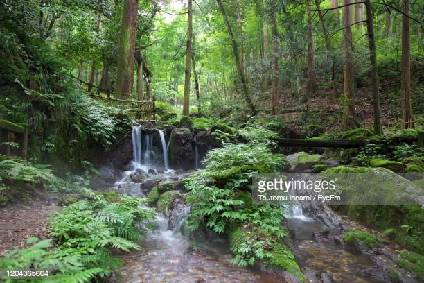 scenic view of waterfall in forest - 福井県 ストックフォトと画像