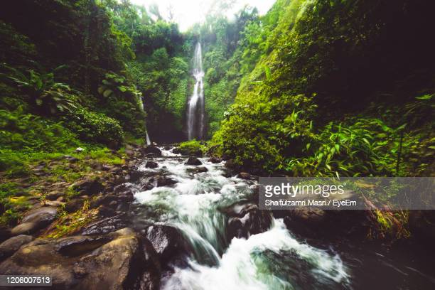 scenic view of waterfall in forest - shaifulzamri foto e immagini stock