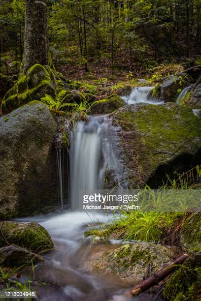scenic view of waterfall in forest - michael jaeger stock pictures, royalty-free photos & images