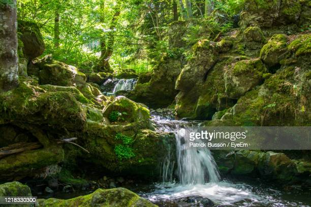 scenic view of waterfall in forest - auvergne rhône alpes stock pictures, royalty-free photos & images