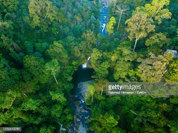 scenic view of waterfall in forest - rahmad himawan stock pictures, royalty-free photos & images