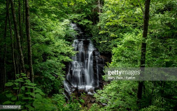 scenic view of waterfall in forest - barry wood stock pictures, royalty-free photos & images