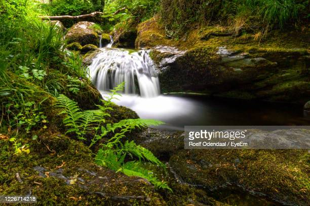 scenic view of waterfall in forest - stream stock pictures, royalty-free photos & images