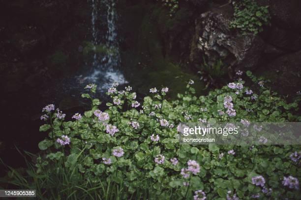 scenic view of waterfall in forest - bortes imagens e fotografias de stock