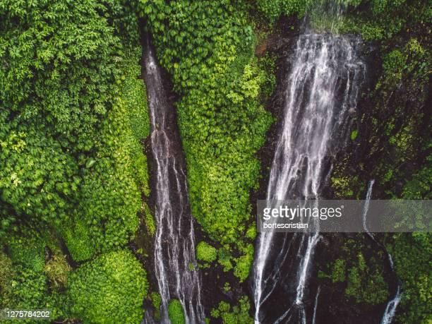 scenic view of waterfall in forest - bortes foto e immagini stock
