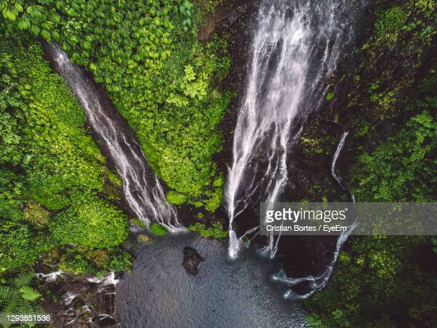 scenic view of waterfall in forest - bortes stock pictures, royalty-free photos & images