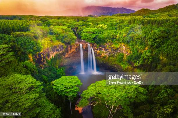 scenic view of waterfall in forest - water fall hawaii stock pictures, royalty-free photos & images
