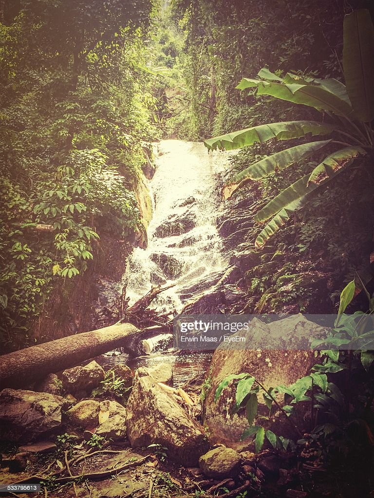 Scenic View Of Waterfall In Forest : Foto stock