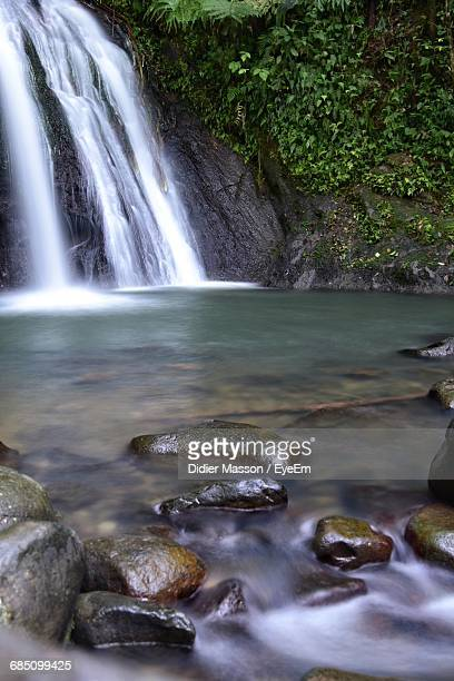 scenic view of waterfall in forest - guadeloupe photos et images de collection