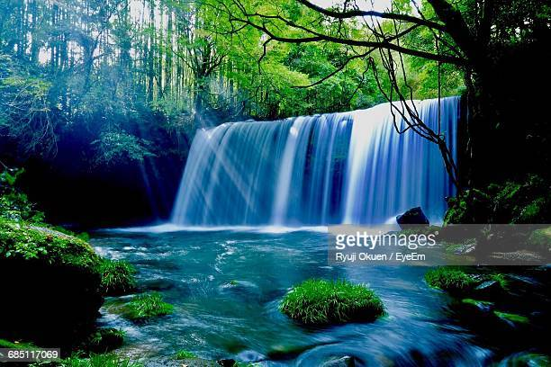 scenic view of waterfall in forest - 滝 ストックフォトと画像