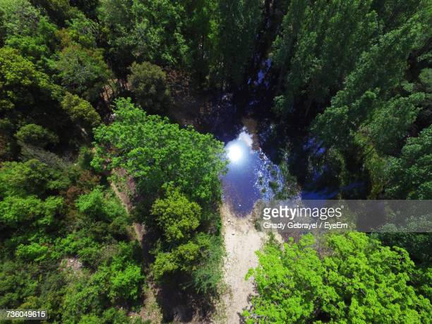 scenic view of waterfall in forest - lebanon stock photos and pictures