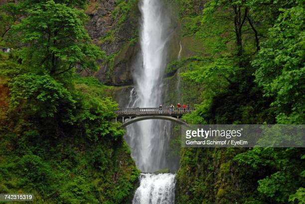 scenic view of waterfall in forest - gerhard schimpf stock pictures, royalty-free photos & images