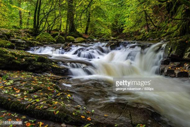 scenic view of waterfall in forest,aberfeldy,united kingdom,uk - アバフェルディ ストックフォトと画像