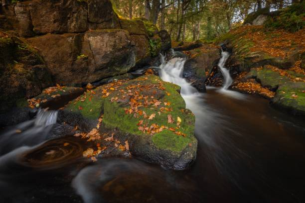 Scenic view of waterfall in forest,County Wicklow,Ireland
