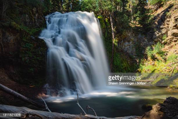 scenic view of waterfall in forest,deschutes national forest,oregon,united states,usa - deschutes national forest stock pictures, royalty-free photos & images