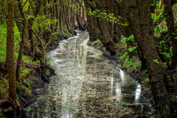 Scenic view of waterfall in forest,Gadra bos,Netherlands