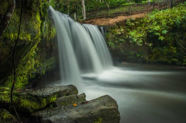 Scenic view of waterfall in forest,Joya de los Sachas Canton,Ecuador