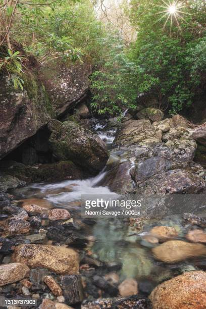 scenic view of waterfall in forest,newcastle,united kingdom,uk - newcastle united pictures stock pictures, royalty-free photos & images