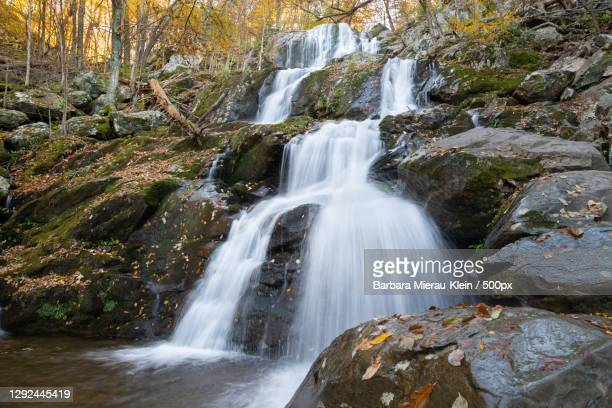 scenic view of waterfall in forest,shenandoah national park,virginia,united states,usa - klein stock pictures, royalty-free photos & images