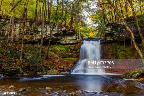 scenic view of waterfall in forest,sullivan county,pennsylvania,united states,usa - sullivan county pennsylvania stock pictures, royalty-free photos & images