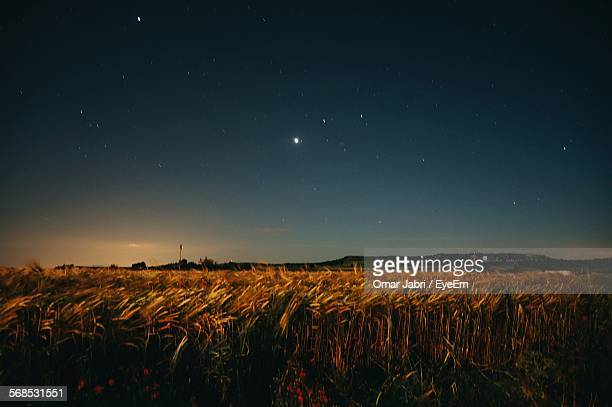 Scenic View Of Wheat Crop In Field At Night