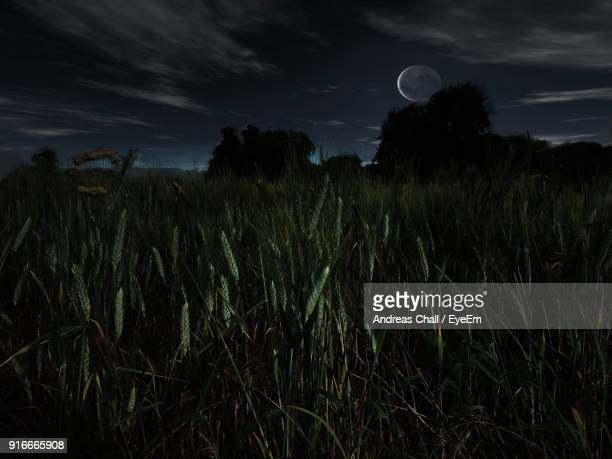 Scenic View Of Wheat Field Against Sky At Night