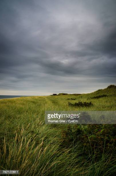 Scenic View Of Wheat Field Against Storm Clouds