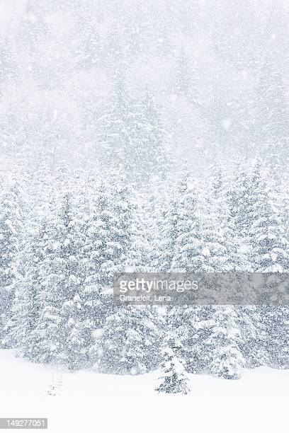 Scenic view of winter forest