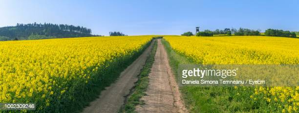 scenic view of yellow flowering plants on field against sky - oilseed rape stock pictures, royalty-free photos & images