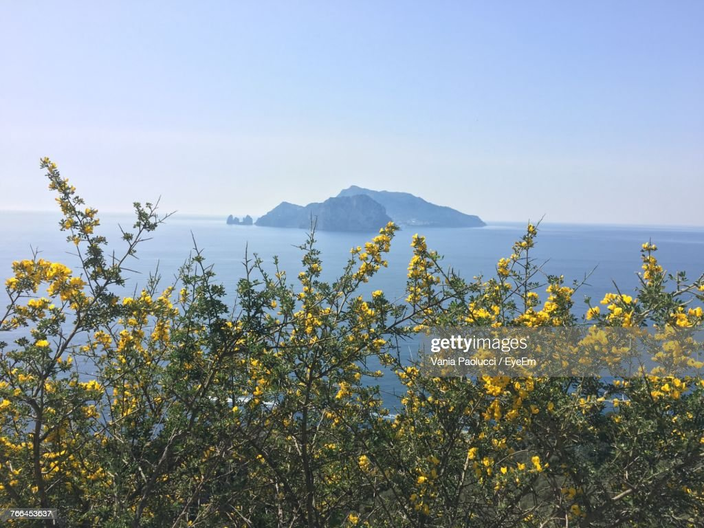 Scenic View Of Yellow Flowers Against Clear Sky Stock Photo Getty