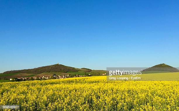 Scenic View Of Yellow Oilseed Rape Field By Mountains Against Clear Sky