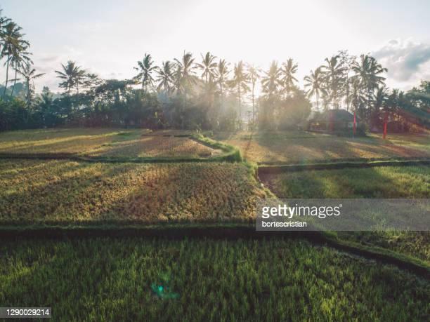 scenic view rice paddies against sky - bortes stock-fotos und bilder