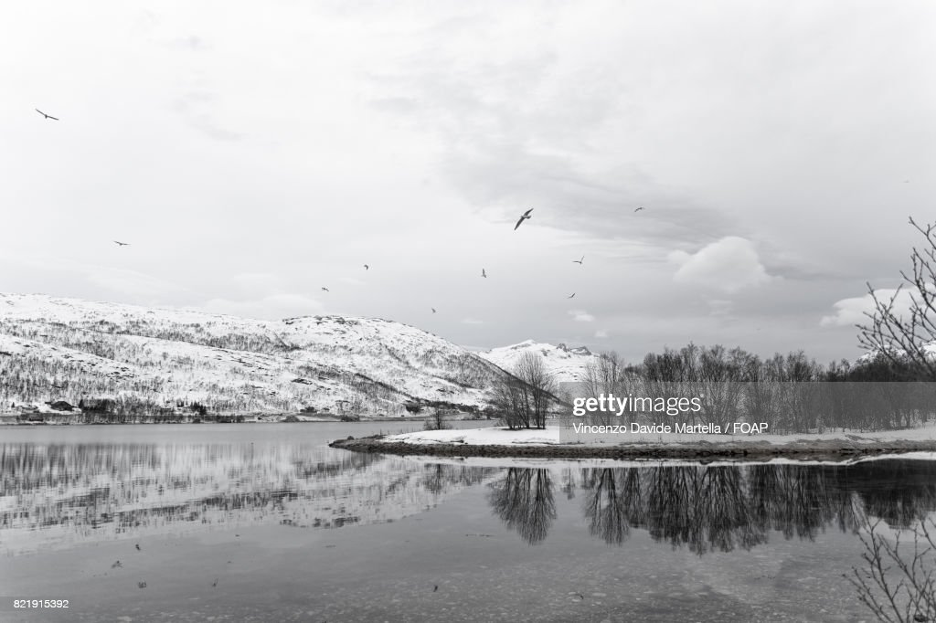 Scenic view river during winter : Stock Photo