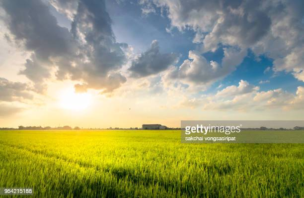 scenic view sun shining over the field against sky during sunset - paddy field stock pictures, royalty-free photos & images