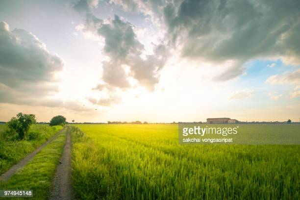 scenic view sun shining over the field against sky during sunset - organic farm stock pictures, royalty-free photos & images