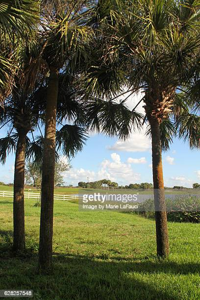 scenic view through palm trees - fauci stock pictures, royalty-free photos & images