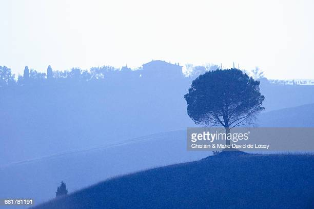 Scenic view, tree in foreground, Buonconvento, Tuscany, Italy