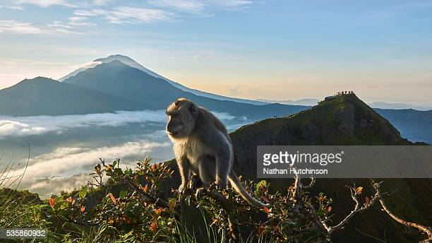 Scenic view with monkey in foreground from the top of Batur volcano Bali