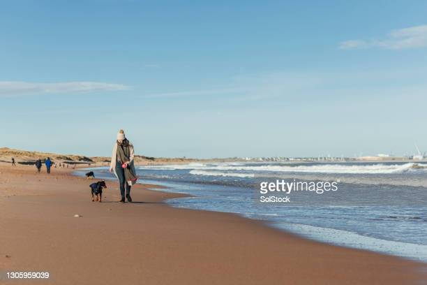 a scenic walk - pet toy stock pictures, royalty-free photos & images