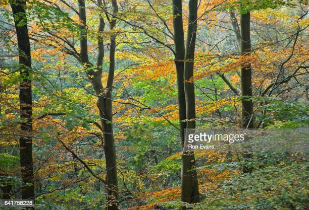 Scenic wild landscapes in and around Cannock Chase Forest