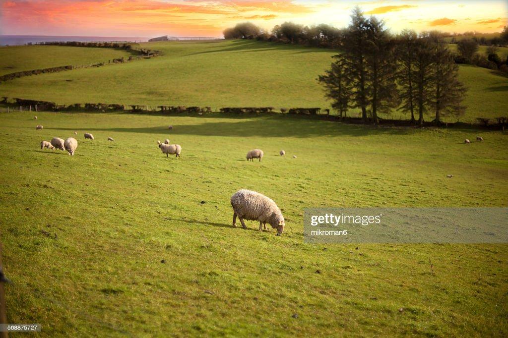 Scenics Irish landscape : Stock Photo
