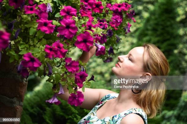 scented petunias - elena blume stock-fotos und bilder
