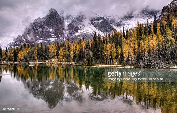 schaffer lake - lake louise stock photos and pictures