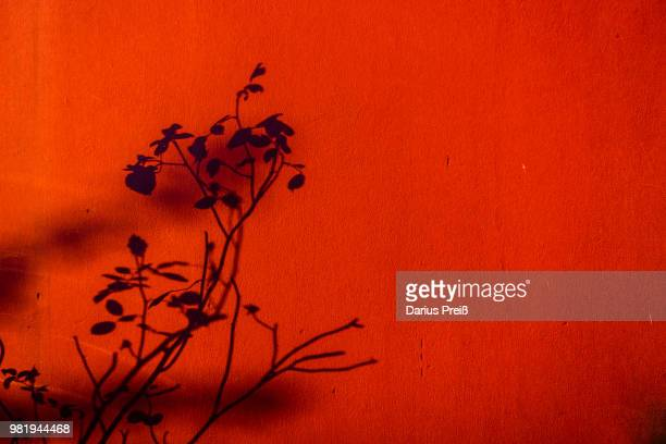 schatten am morgen - morgen stock pictures, royalty-free photos & images