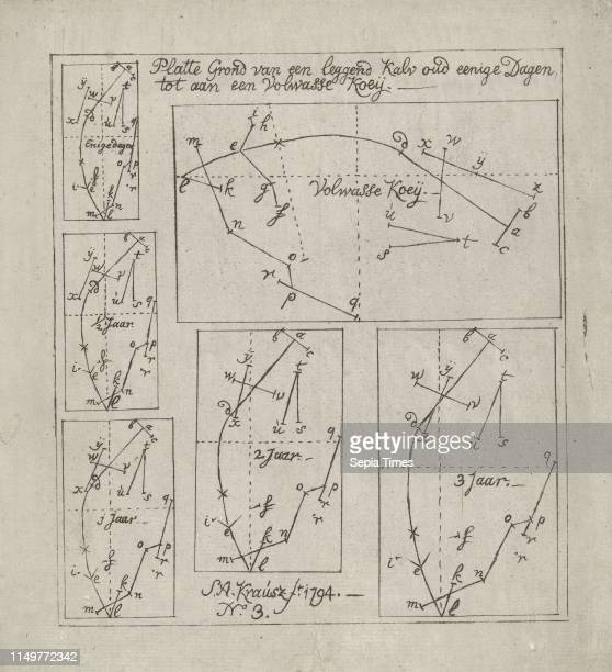 Schematic representation of lying cows of different ages Simon Andreas Krausz 1794