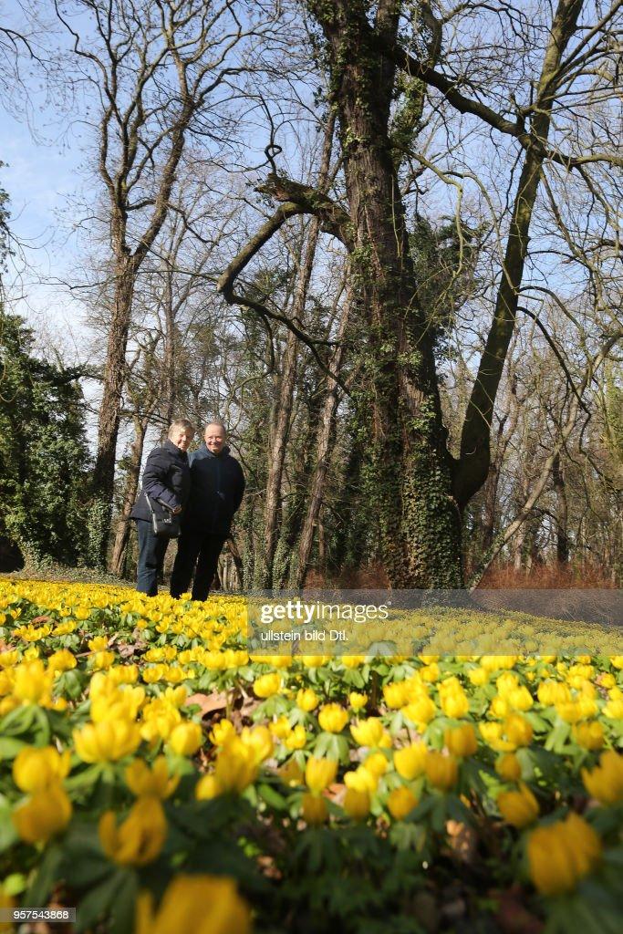 Schloss Ostrau Schlosspark Winterlinge Bluhen Bluten Fruhbluher