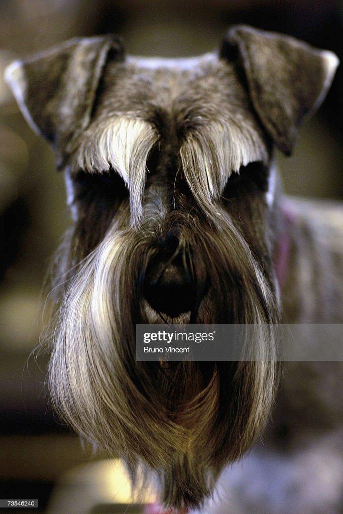 Crufts International Dog Show : News Photo