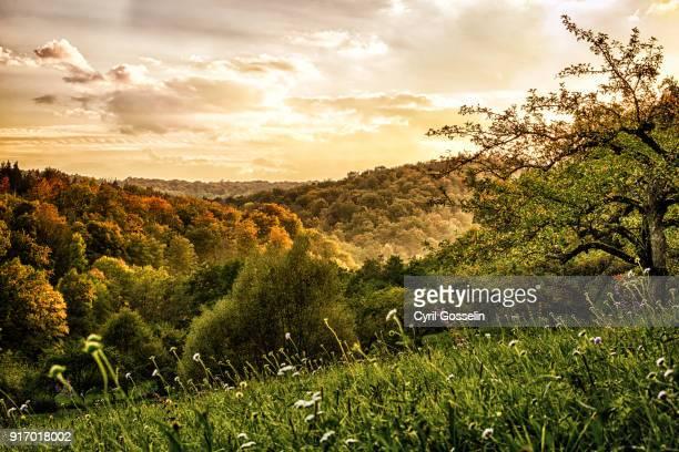 schönbuch forest in autumn - obstbaum stock-fotos und bilder
