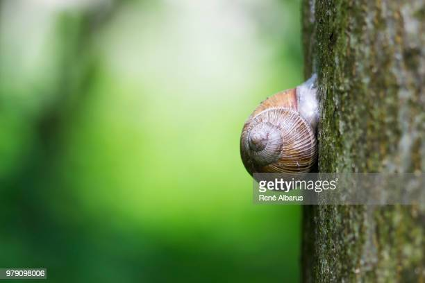 schnecke am baum - baum stock pictures, royalty-free photos & images